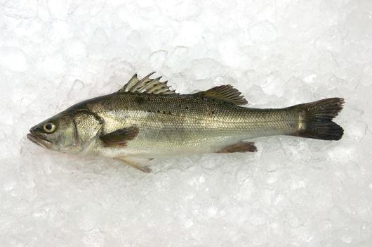 Japanese Sea Bass Round