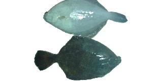 魚図鑑-2.jpg