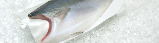 養殖魚(冷凍)